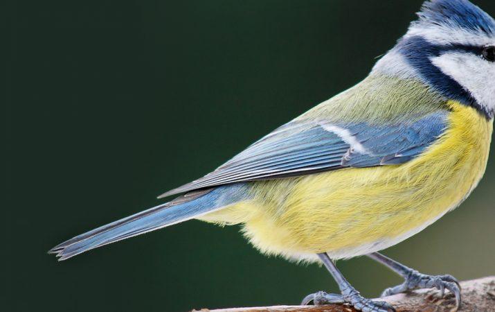 Vogelfütterung